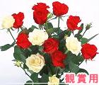 観賞用バラ花束通販