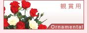 観賞用バラ花束