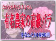 最上級バラ花束